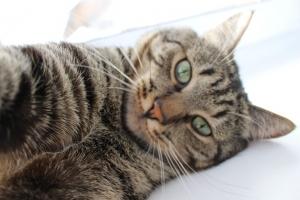 общество, селфи, фото, кот, ротвейлеры, кот на фоне собак, снимок, животные, фото