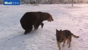 медведь, собака, цирк, майорка