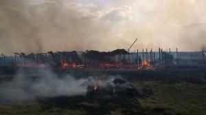 украина, киевская область, вышгородский район, приют для животных, поджог, гибель собак