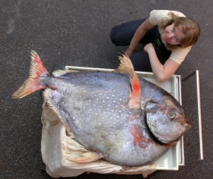 калифорния, рыба-луна, опах, рыбы