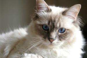 коты, харьков, животные, общество, украина