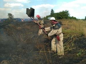 пожар, чрезвычайное происшествие, Днепропетровская область, спасатели, лесные пожары