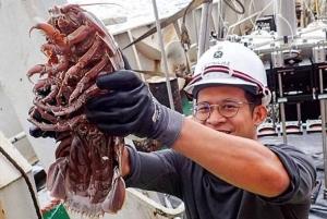 исследование, экспедиция, Индийский океан, глубоководный таракан, необычное существо, морские обитатели, жители глубин, фото, кадры, снимки