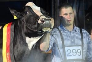 леди гага, корова, германия, конкурс красоты