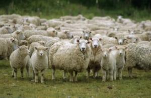 геннадий москаль, луганская военно-гражданская администрация, луганская область, фермер, овцы, кража