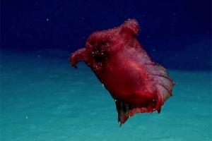 океан, наука, ученые, монстр, чудища, существа, видео