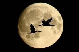 луна, наука, космос, земля, гипотеза