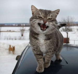 кот, полицейский, ролик, видео, хит