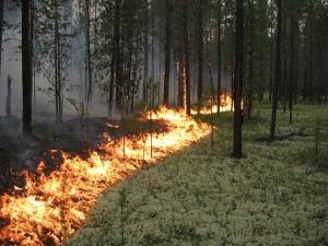 Хмельницкий, пожар, криминал, новости Украины
