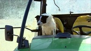 шотландия, трасса, собака, общество, трактор