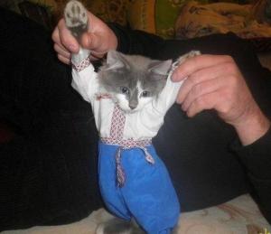кот, путин, видео, майдан