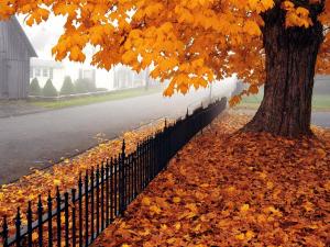 наталья диденко, погода в украине, прогноз погоды, новости украины, погода на октябрь, погода на неделю, прогноз на осень