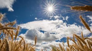 погода, новости украины, новости киева, киев сегодня, ливни, май, наталья диденко, синоптик, погода сегодня, прогноз погоды, погода в украине