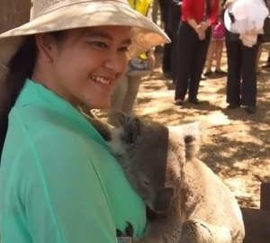эббот, австралия, коалы, животные, фото