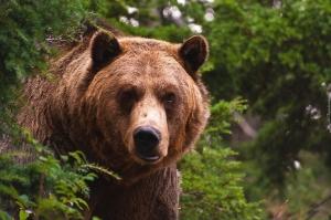 частный зоопарк, воронежская область, нападение, медведь, жертва, пенсионер, смерть, убийство, происшествия, новости украины