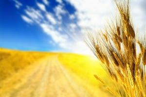 ДонОГА, зерновіе, урожай, потери, АТО