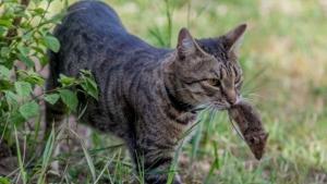 кошка охотница, кошка ловит зайцев, новости Беларуси