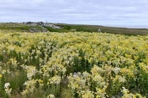 Арктика, Полярные широты, Оазис, Растительность, Аномалия, Север, Территория, Животные, Растения