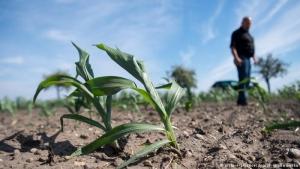 ООН, погода, засуха, изменение климата, продовольствие, голод, аграрии