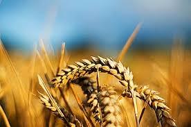 аграрии, сельское хозяйство, НДС, сельхозпредприятие, Кабинет министров, Минфин