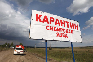 Сибирская язва, Дагестан, инфекция, инкубационный период, скот, летальный исход