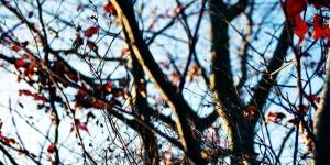 новости Донбасса, прогноз погоды, общество, Донецк, Макеевка, Ясиноватая, Горловка, Красноармейск, Красный Лиман, Славянск, Краматорск, Мариуполь, Марьинка