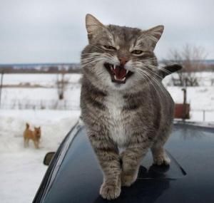россия, кот, арест, ставрополье, кредит