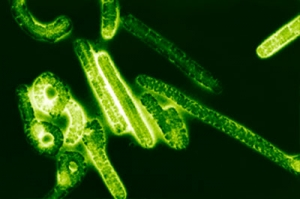 вирус Эбола, Минздрав Украины, памятка