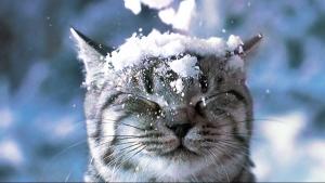 погода, новости Украины, Укргидрометцентр, Наталья Диденко, мороз, снег, циклоны