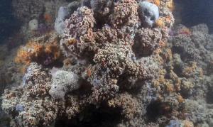 каралловый риф, Италия, Австралия, Мальдивы, море, находка, ученые
