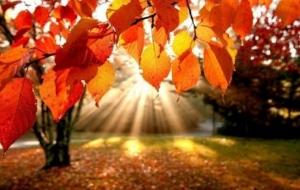 погода в украине, прогноз погоды, осень, заморозки, холода, потепление, бабье лето, дожди, ливни, новости украины