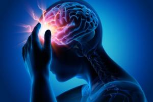 общество, наука, медицина, мозг, происшествие, мыши, Япония