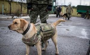 луганские пограничники, служебные собаки, бронежилеты, волонтеры
