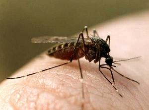 комар, ученые,  исследования