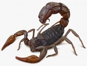 ископаемые, скорпион