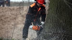 Лес, дерево, Украина, топливо, НДС, запасы