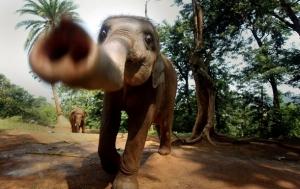 мир животных, слоны, индия, происшествия
