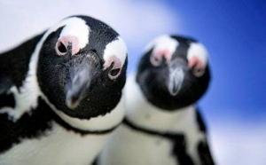 Наука, пингвины, Антарктида