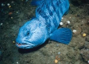 США, озеро Гастон, рыба-мутант, гигантская рыба, синяя рыба, странное существо, кадры, фото, видео