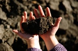 днр, уголь, пайщики, земля, помощь
