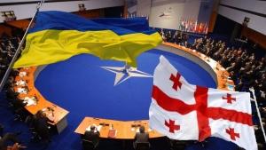 Украина, Грузия,Нато, политика, общество, Алли, ПА НАТО, членство Украины и Грузии в НАТО, мнение