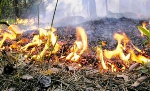 прогноз погоды, гидрометцентр, ГСЧС, пожар, опасность, угроза, Украина, предупреждение