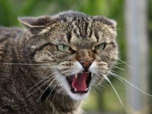 красноармейск, происшествия, карантин, бешенство, кошка