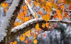 снег, осень, похолодание, погода, украина, дожди, прогноз погоды, температура воздуха