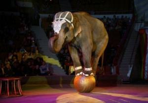 слон, убил, цирк, сбежал, происшествия, германия, общество, новости