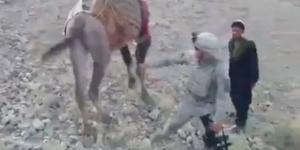 Афганистан, США, солдаты, верблюд, удар, необычное