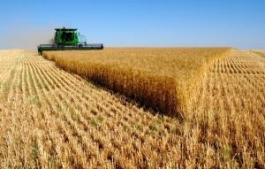 ДНР, фермеры, урожай, реализация