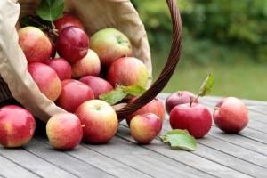 яблочный спас, праздник, запреты, преображение господне, обычаи, традиции, церковь, религия, приметы