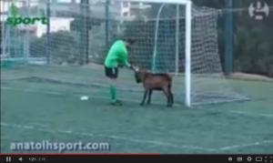 крит, футбол, матч, козел