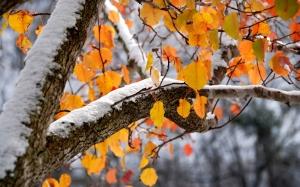 снег, дождь, тепло, погода, укргидрометцентр